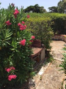 La Playa - Sole e Relax in Sardegna, Apartmanok  Olbia - big - 36