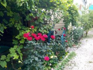 Черноморская лоза, Гостевые дома  Джубга - big - 26