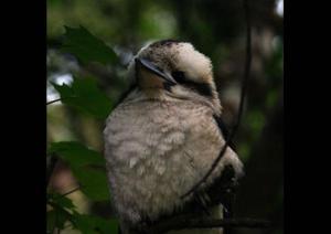 Allenvale, Chaty v prírode  Lorne - big - 13