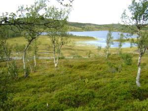 Farhovd Hyttegrend, Dovolenkové domy  Torvetjørn - big - 6