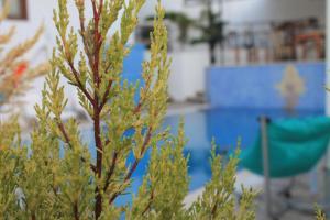 Cunda Dalyan Otel, Hotel  Cunda - big - 31