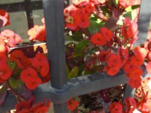 Rancho los transparentes, Dovolenkové domy  Vejer de la Frontera - big - 5