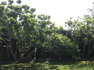 Rancho los transparentes, Dovolenkové domy  Vejer de la Frontera - big - 4