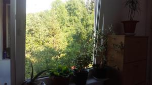 Grlica Apartments - фото 3