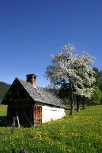Sonnhof, Penzióny  Ramsau am Dachstein - big - 45
