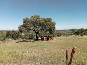 Herdade Da Amendoeira, Penzióny  Arraiolos - big - 47