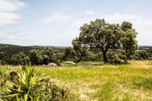Herdade Da Amendoeira, Penzióny  Arraiolos - big - 66
