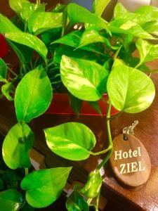 obrázek - Hotel Ziel