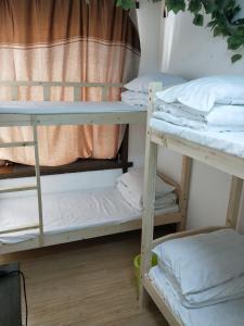 obrázek - Trip in sunshine Hostel
