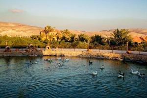 The farm - المزرعة - Umm Qays