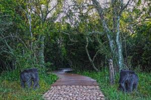 Sibuya Game Reserve and Lodge, Resorts  Kenton on Sea - big - 33