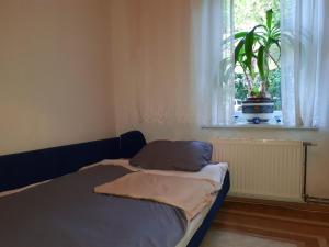 Appartment Stari Grad - фото 8