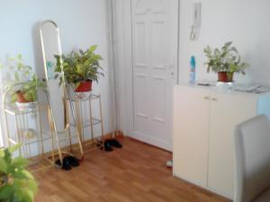 Apartment Alipašino - фото 4