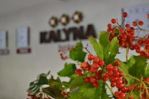 Отель Kalyna - фото 4