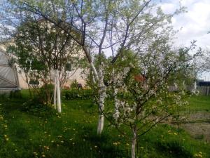 Гостевой дом Раджа - фото 9