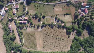Azienda Agricola Il Querceto