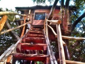Ein bild von Volcano Eco Treehouse