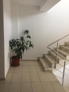 Andreea's Apartment, Апартаменты  Бухарест - big - 23