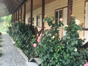 Guest house Mandarinhouse, Penziony  Alakhadzi - big - 6