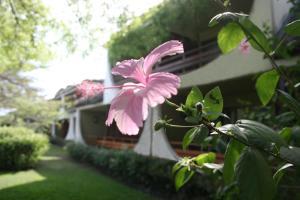 Hotel Club du Lac Tanganyika, Отели  Bujumbura - big - 28