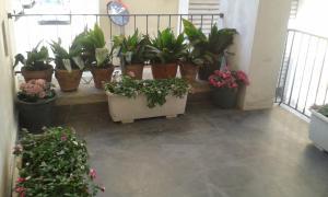 Gli dei e le Rose, Holiday homes  Agerola - big - 20