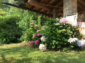 Agriturismo Sogni D' Orto, Bed and Breakfasts  Faedis - big - 25