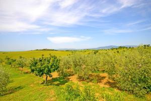 Villa Anita, Holiday homes  Cortona - big - 40