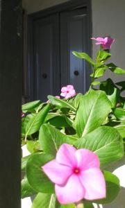 Gli dei e le Rose, Holiday homes  Agerola - big - 25