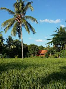 Bali Bila Bungalow, Affittacamere  Kubutambahan - big - 41
