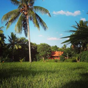 Bali Bila Bungalow, Affittacamere  Kubutambahan - big - 34