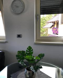 Apartment Star, Ferienwohnungen  Zlatibor - big - 21