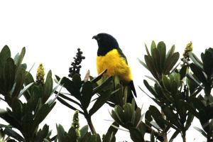 Alojamiento Reserva Ecologica Andes, Affittacamere  Bogotá - big - 8
