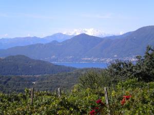 Agriturismo Azienda Viti-Vinicola Hostettler