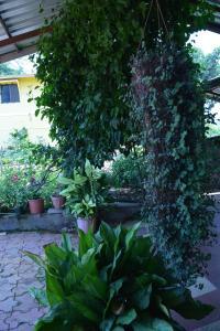Mango Holiday Resort, Amba