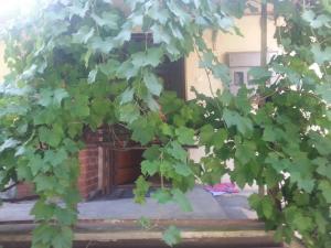 Green Apartment - фото 24