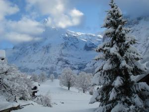 Chrinnengletscher, Apartments  Grindelwald - big - 7
