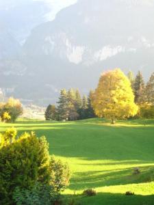 Chrinnengletscher, Apartments  Grindelwald - big - 8