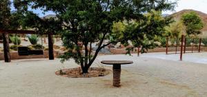 Stagecoach Trails RV Resort, Kempy  Julian - big - 66