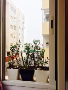 Residence Najah, Appartamenti  Agadir - big - 1