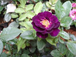 Indi Rose Garden, Rezorty  Habarana - big - 11