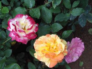 Indi Rose Garden, Rezorty  Habarana - big - 28