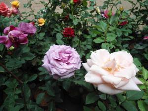 Indi Rose Garden, Rezorty  Habarana - big - 13