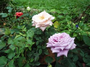 Indi Rose Garden, Rezorty  Habarana - big - 27