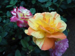 Indi Rose Garden, Rezorty  Habarana - big - 26