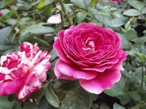 Indi Rose Garden, Rezorty  Habarana - big - 14