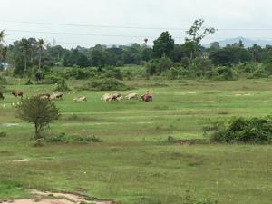 Private Home near PATAYA, Penzióny  Ban Bang Lamung - big - 9