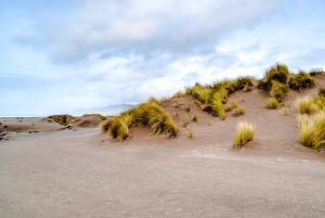 Mendocino Dunes - Dune Flower, Prázdninové domy  Fort Bragg - big - 9