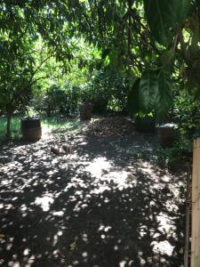 Guest house Zolotoy bereg, Affittacamere  Pizunda - big - 15