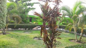 Perfect Lodge, Turistaházak  Mangochi - big - 4