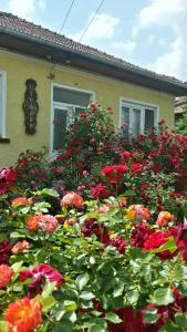 Guest House Stefani-Elena
